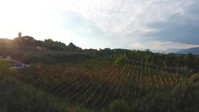 Aerial shot, gorgeous flyover on the italian vineyards with soft evening light on the sunset stock footage