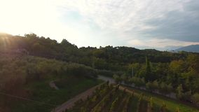 Aerial shot, gorgeous flyover on the italian vineyards with soft evening light on the sunset stock video footage