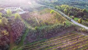 Aerial shot, gorgeous flyover on the italian vineyards with soft evening light on the sunset stock video