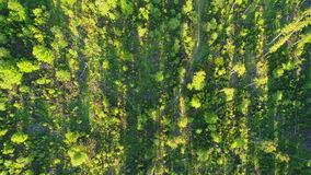 Aerial shot of green forest stock video footage