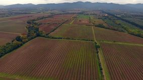 Aerial shot, huge vineyards with the autumn colors after the grape harvest in Tuscany, Italy, shot with drone stock footage