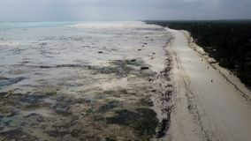 Aerial shot Jambiani Beach at Low tide in the Zanzibar. Large outflows on the island stock video footage