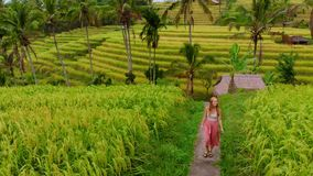 Aerial shot of Jatiluwih Green Land village. Stunning rice terraces on the Bali island. Young woman walking along rice. Field stock video