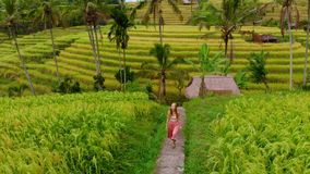 Aerial shot of Jatiluwih Green Land village. Stunning rice terraces on the Bali island. Young woman walking along rice. Field stock video footage
