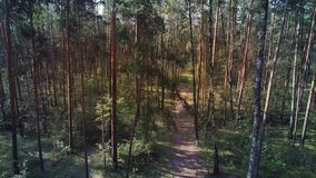 Aerial shot of mixed forest pines and birches. Camera is flying up in the forest stock footage