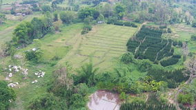 Aerial shot over forest and field in mountains. Video Aerial shot over forest and field in mountains stock footage