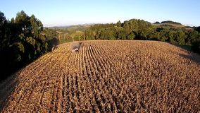 Aerial shot over harvesting corn field stock video footage