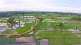 Aerial shot rice field and mountain view stock video