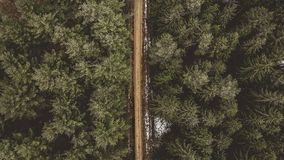 Aerial Shot of Road Between Pine Trees stock photos