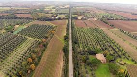 Aerial shot, a road between two cypress raws, in the middle of cultivated fields in Tuscany, Italy, shot with drone stock footage