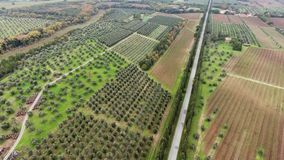 Aerial shot, a road between two cypress raws, in the middle of cultivated fields in Tuscany, Italy, shot with drone stock video