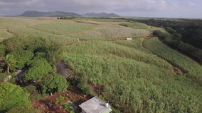 Aerial shot of sugarcane fields in Mauritius stock video footage
