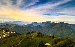 Tea plantation landscape. royalty free stock images