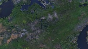 Aerial shot of swamp from the top view. The action in the real time stock video footage