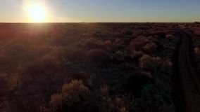 Aerial shot of tree savanna at sunset. Sun over the savanna in Namibia. Aerial view of the territory of Africa stock footage