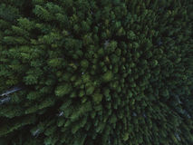 Aerial shot of tree tops in dense forest Stock Image