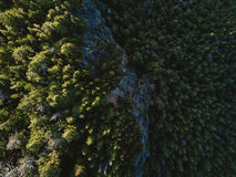 Aerial shot of tree tops in dense forest Royalty Free Stock Image