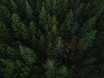 Aerial shot of tree tops in dense forest Stock Images
