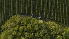 Aerial shot of a tree tractors working on vineyard, Bordeaux royalty free stock photo