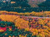 Aerial Shot Of Trees royalty free stock image