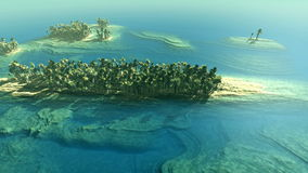 Aerial shot of tropical islands. With palms stock footage