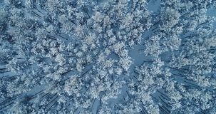 An aerial shot of a week wind shaking the tree tops deeply covered by snow. 4K. An aerial shot of a week wind shaking the tree tops deeply covered by snow stock video footage