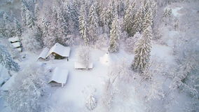 Aerial shot of the white snow in the forest. Trees and houses are filled and covered with thick snow and still its raining snow stock video