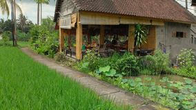 Aerial shot of a woman and her son sitting in a cafe surrounded by beautiful rice fields.  stock footage