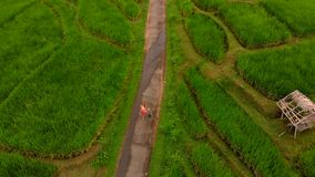 Aerial shot of a young woman and her son walking along beautiful rice terraces on the Bali island. drone moves upwards.  stock footage