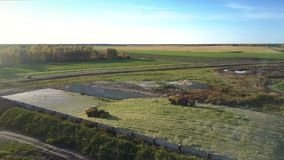Aerial silage ramming bulldozers tamp silo in pit by road. Nice aerial panorama powerful silage ramming bulldozers tamp corn silage in pit near road forest and stock video