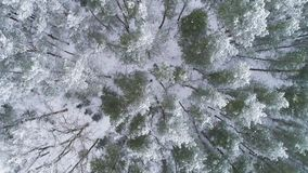 AERIAL. Sliding overhead drone shot of frosted white trees in cold winter. Greeting card background. Raw colours, 4k. AERIAL. Sliding overhead drone shot of stock video