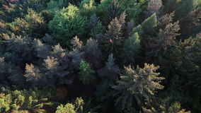 Aerial slow motion view above deep spruce forest. Aerial view above deep spruce forest in slow motion stock video
