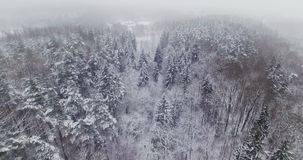 AERIAL. Smooth flight above top of winter forest trees covered by snow. 4k. stock video