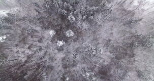 AERIAL. Smooth overhead flight above top of winter forest trees covered by snow. 4k. stock video