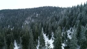 Aerial Snow Covered Trees Drone Footage Landscape Winter Nature Beautiful Europe Forest Mountain Travel White Famous stock video footage