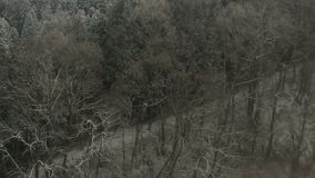 Aerial snow in winter forest.  stock footage