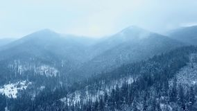 Aerial of snowfall above hills covered with pine evergreen woods. Winter snow fall in the fir tree spruce forest. Aerial of snowfall above hills covered with stock video