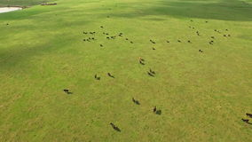 Aerial South Dakota Countryside stock video