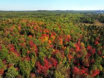 Aerial stunning colorful fall forest Royalty Free Stock Photos