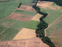 Aerial of Sugar Cane fields of different stages of age Royalty Free Stock Photos