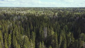 Aerial survey of forest. Top view.  stock footage