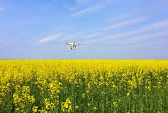 Aerial survey on the rapeseed field Stock Images