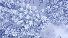 Aerial top down camera zoom video of beautiful blue winter pine snow forest in 4K. Aerial top down camera zoom video of beautiful blue winter young pine trees stock photos