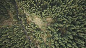 Aerial top down of conifer forest at mountain hills. Nature landscape at autumn day. Tourists hiking
