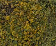 Flying above a colorful treetops autumn trees. forest France royalty free stock photography