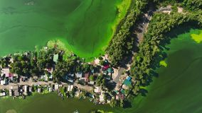 Aerial top down of green algae polluted river water near fishermen village. Environmental problems, ecology and nature stock footage