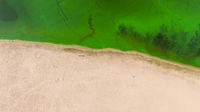 Aerial top down of half sandy beach and half water polluted with green algae. Environmental problems, ecology and nature stock video