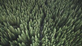 Aerial top down pine forest at mountain river. Nobody nature landscape at autumn. Green conifer tree