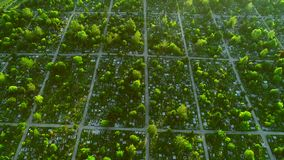 Aerial top down view of cemetery also called graveyard, a place where the remains of dead people are buried. 4K. stock footage