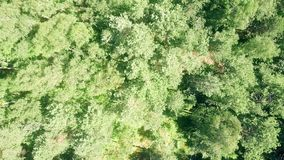 Aerial top down view of European forest trees on a sunny summer day Royalty Free Stock Photography